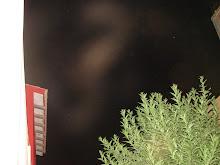 Avistamiento Alien gris a ver si lo ven??? 13/1/2010 Huacho