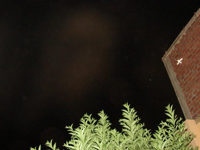 Ultimo Avistamiento Ovni 28/enero/2010 en la pared de ladril  los'' PICAFLOR'' ET apuntando