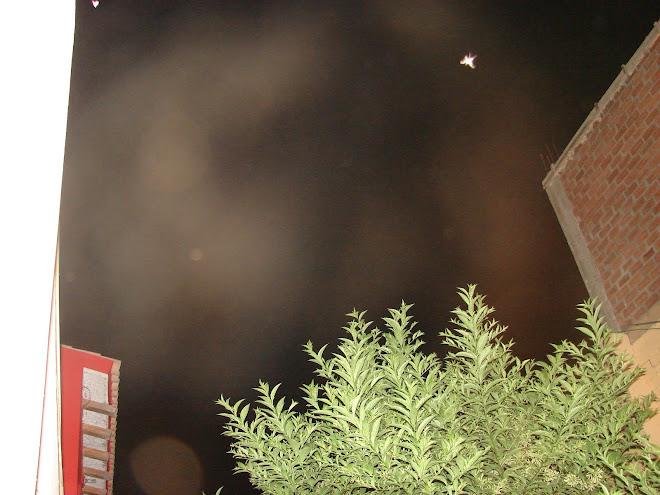 Ultimos Avistamientos Ovni 31/enero/2010 Alien felino y 11va Campana ET y ???
