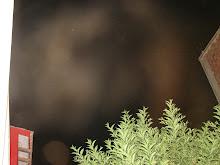 Ultimos Avistamientos Ovni Alien felino 1/feb/2010 hrs 04:20:22 am DSC05591jpg sec x Rodolfo Trujil