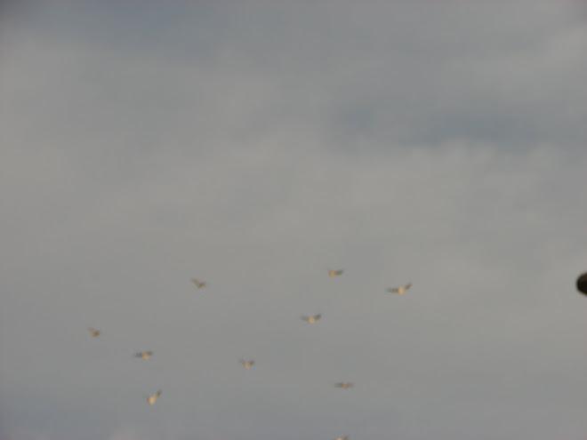 17febrero,avistamientos ''ESFERAS Ovnis en AVES x Fito.33.p,Huacho,Mar,contactos,Cielo,orbs,18,17