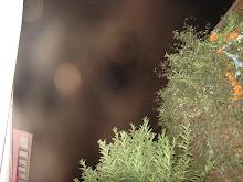 ALIENS en cielo seguimos Huacho dic/2009