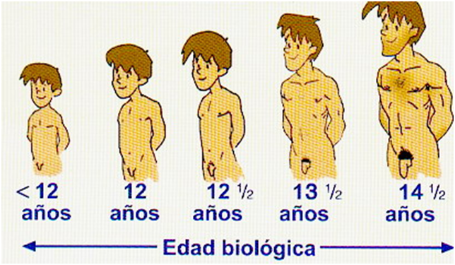 desarrollo pubertad: