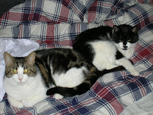 Två av mina katter Sessan & Maja