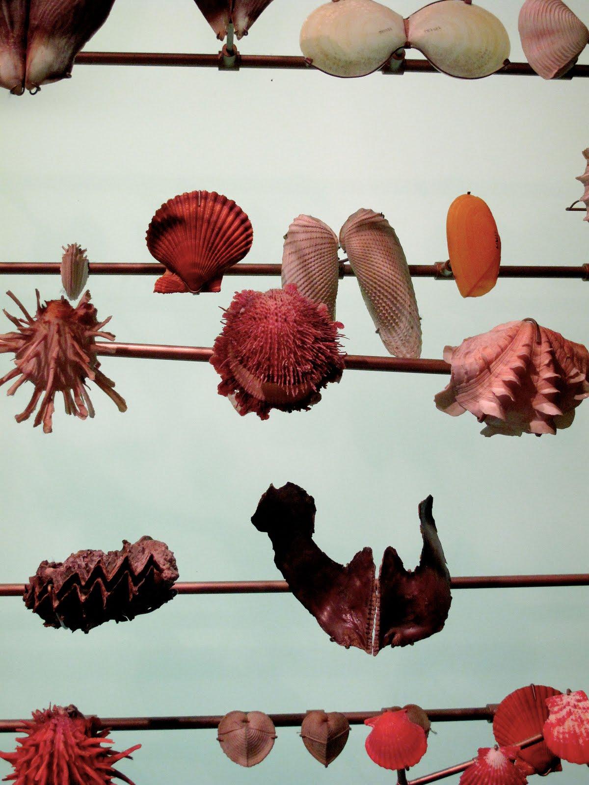 [shells1]