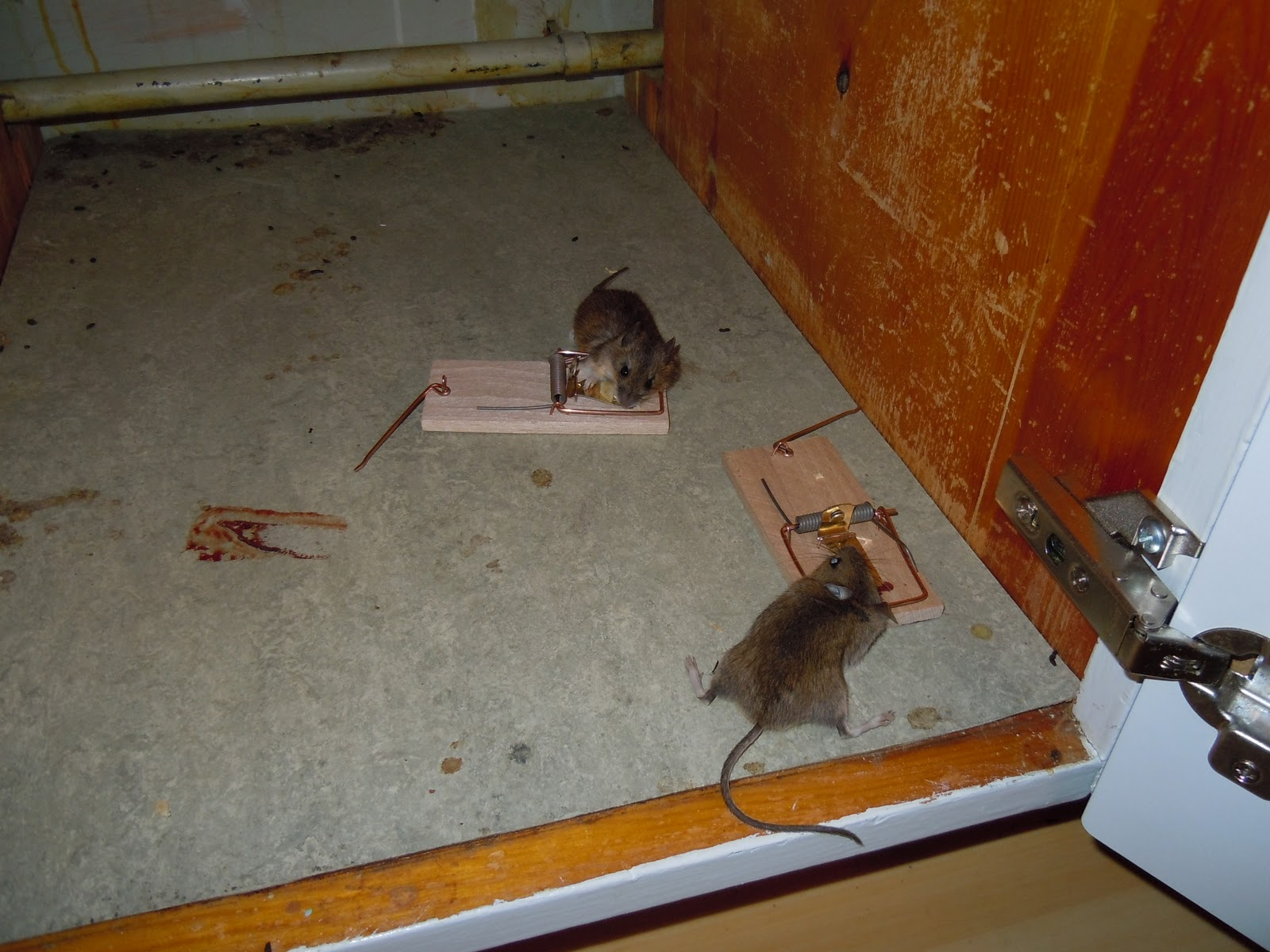 råttfälla clas ohlson