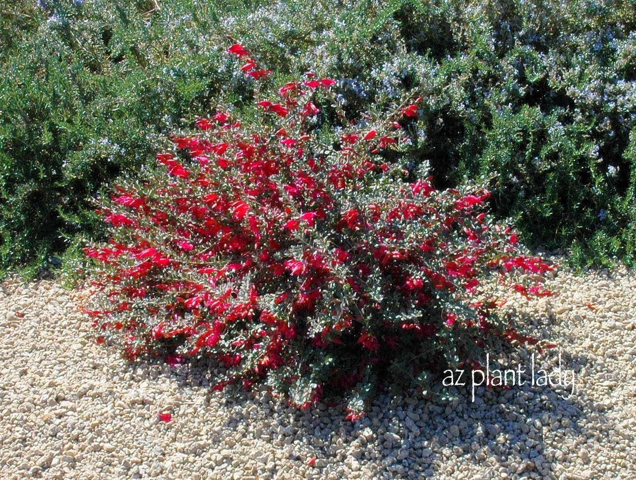 Flower bushes that bloom in winter - Flowers For Both Christmas And Valentine S Day