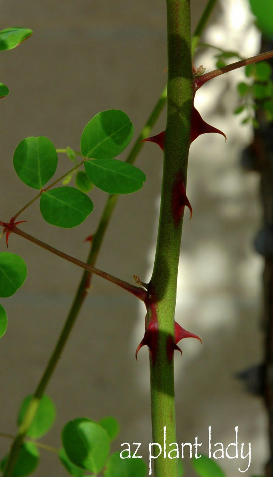 A Wonderful Dilemma Ramblings From A Desert Garden
