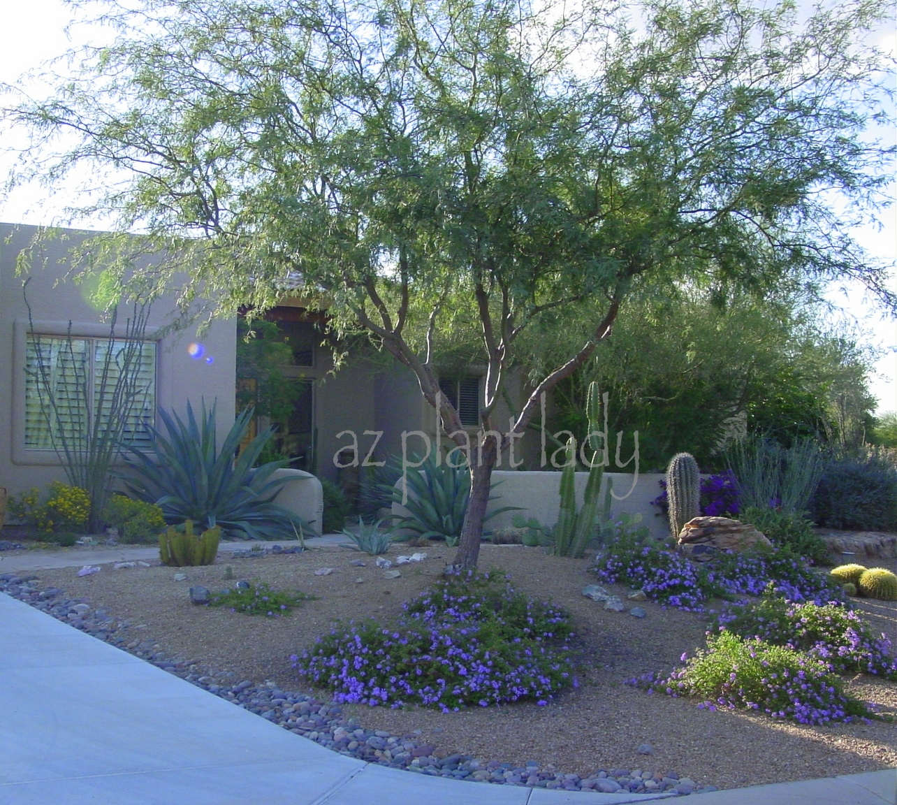 Love beautiful desert gardens this giveaway is for you for Told in a garden designs