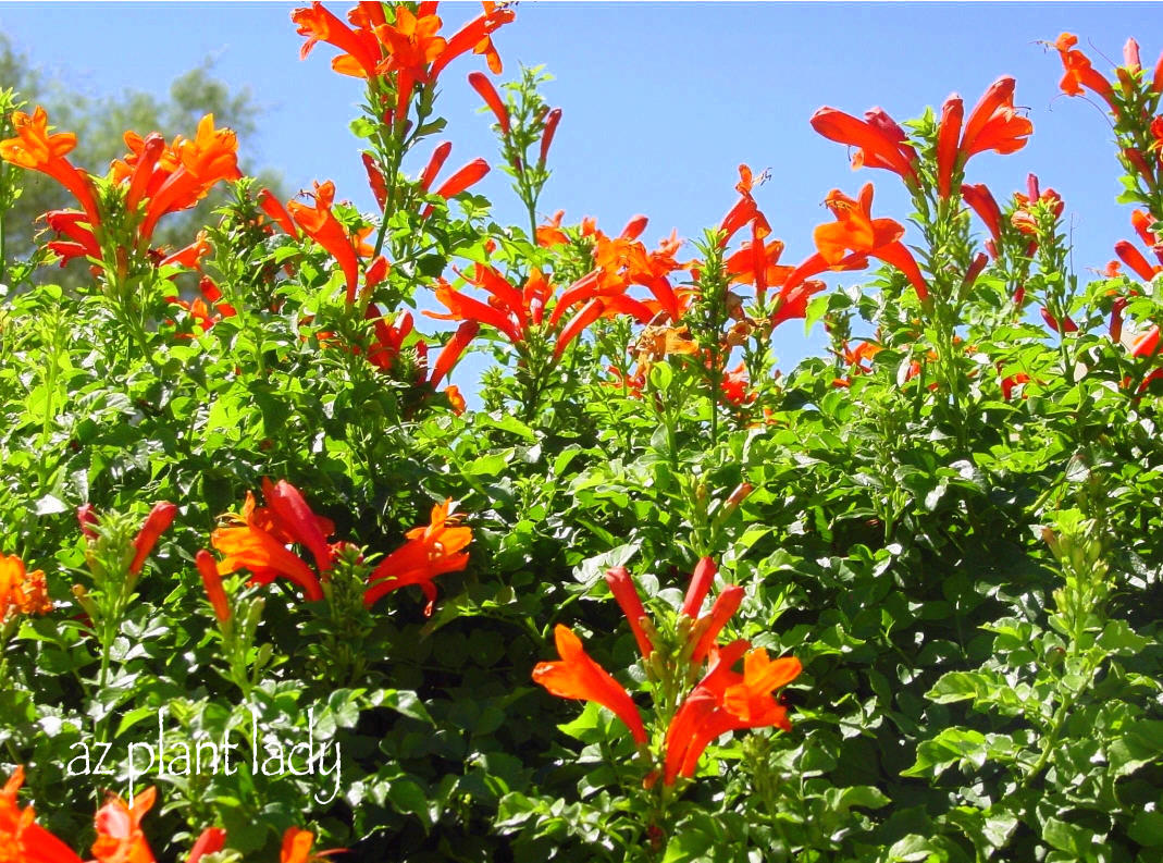 Curing The Garden Blahs With Color Ramblings From A