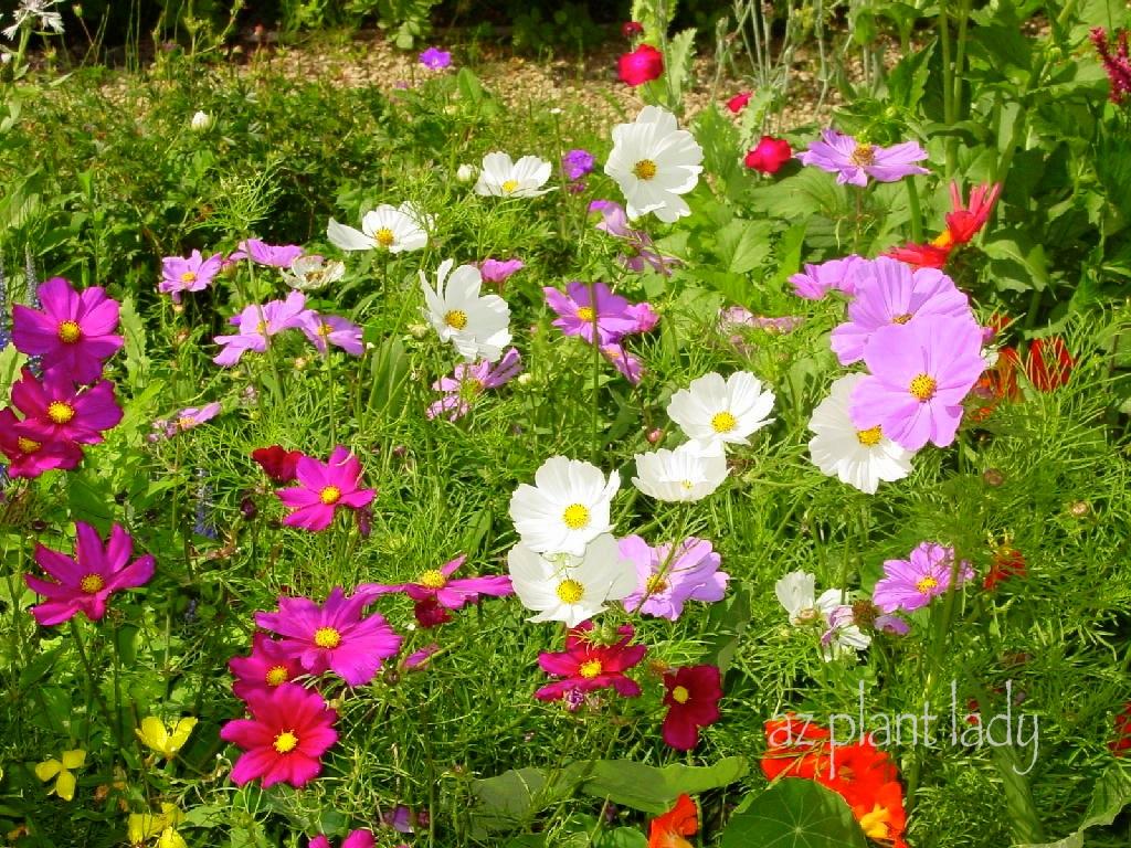 Even vegetables need friends ramblings from a desert garden - Plant vegetable garden friends foes ...