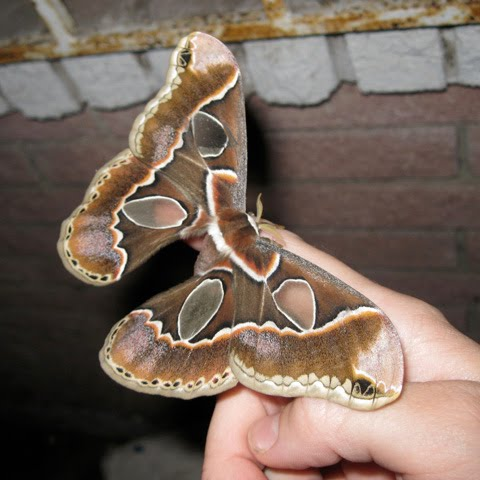 Beautiful moth...