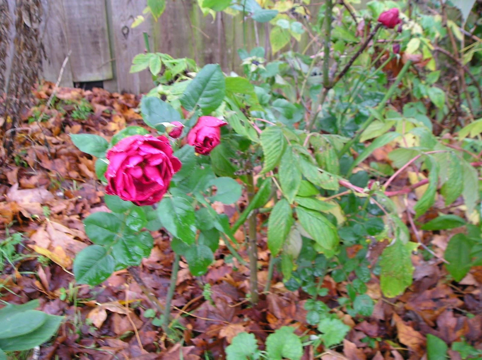 The hobbyist gardener for Indoor gardening meaning