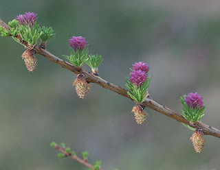 closeup photo of lucia's flowers and cones
