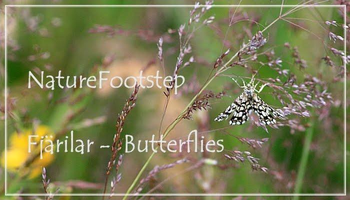 NatureFootsteps Fjärilar / Butterflies