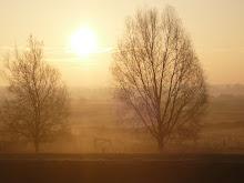 Zon op over Bossche Broek
