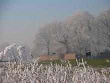 Winterpracht