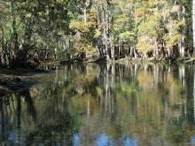 Manatee Springs, FL