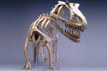 This Is An Allosaurus Skeleton By Robert J Lang Which Was Inspired The Brilliant Tyrannosaurus Rex Of Late Issei Yoshino