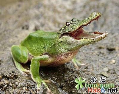 amazing and weird varietal animals