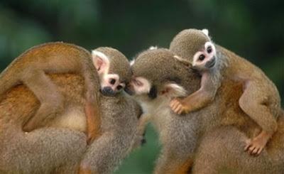 Cute Little Baby Monkeys Cute Little Baby Monkeys