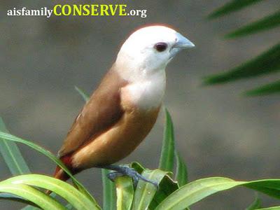 banyak jenis burung terutama dari jenis jenis bondol lo
