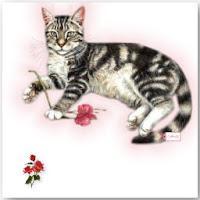 Calico Cat ecg