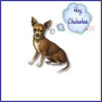 Ay Chihuahua ecg