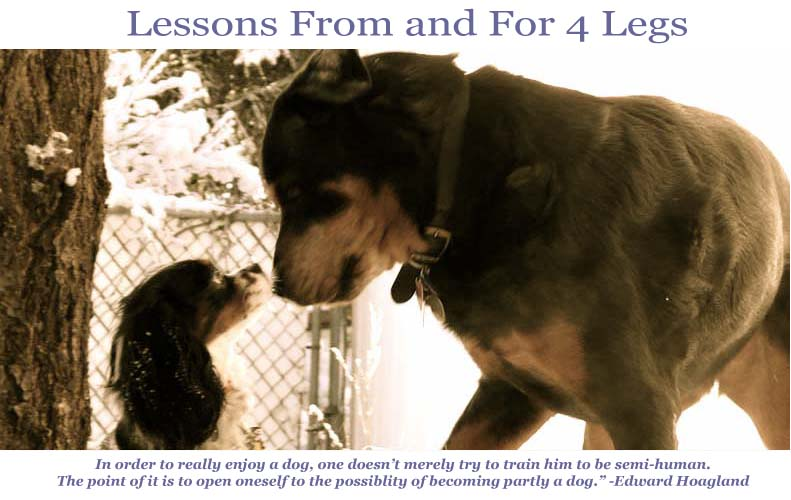 The First Lessons From and For 4 Legs