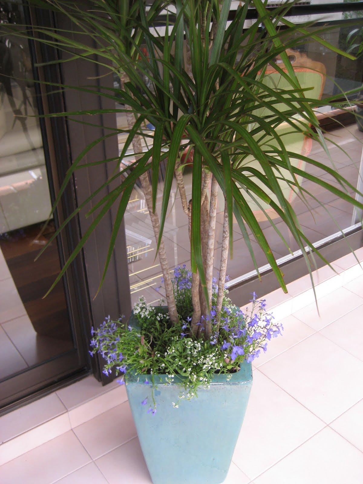 Planificaci n de espacios verdes arreglos florales for Plantas verdes de interior