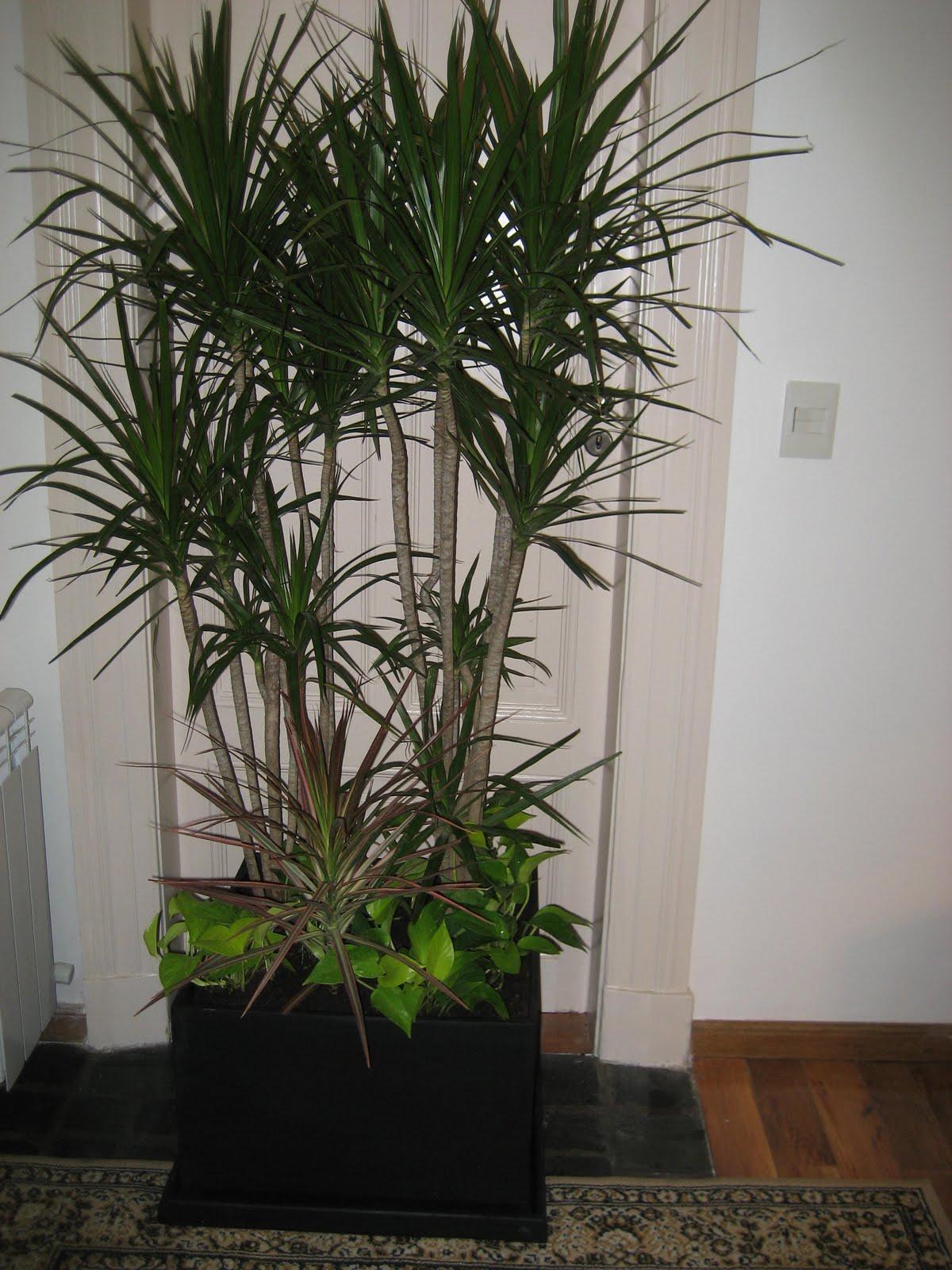 Planificaci 243 N De Espacios Verdes Arreglos Florales Plantas De Interior