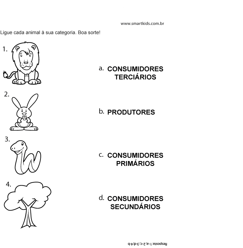 Manual Do Ensino Fundamental