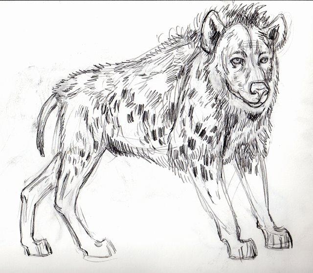 [African+Hyena+portrait+]