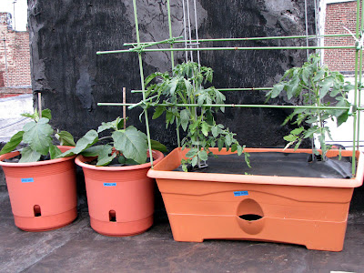 Bushwick Rooftop Container Gardening Vegetables