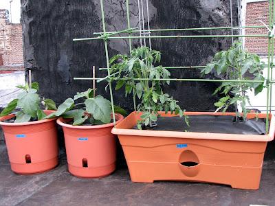 Bushwick Rooftop Container Gardening Vegetables