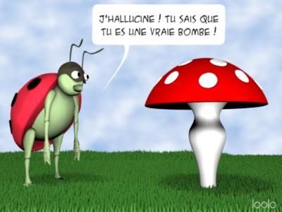coccinelle_champignon