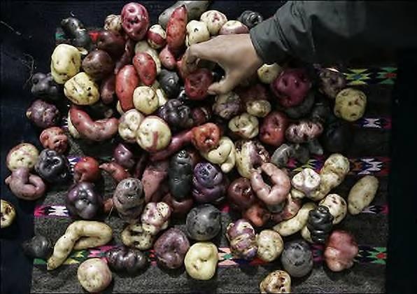 [peru's+colorful+potato.jpg]