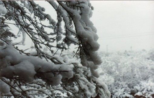 [snow87b.jpg]