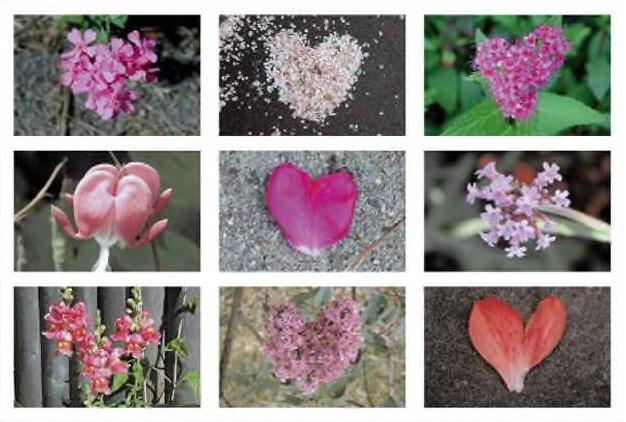 [flower+hearts.JPG]