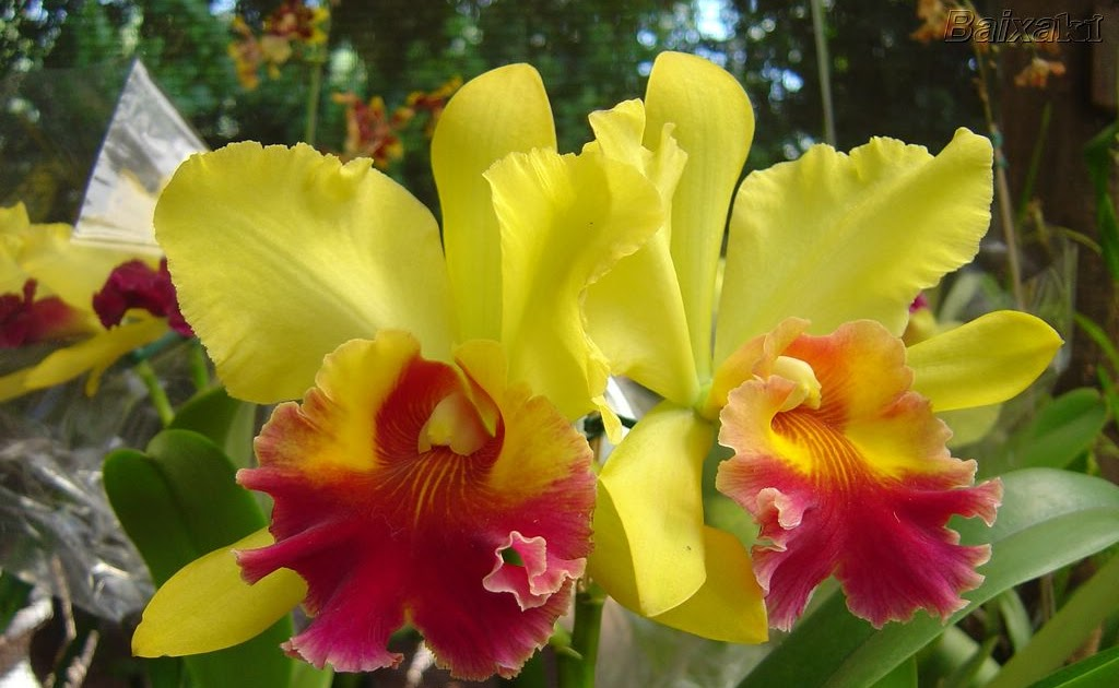 El agronomo valerano hablando de plantas ornamentales for Algunas plantas ornamentales