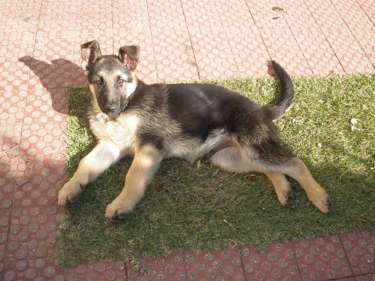 Oscar - 3 meses 15 kg