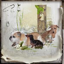 Mijn hondjes!!