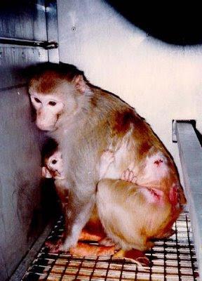 http://4.bp.blogspot.com/_JsdnzvIBL9E/Sc9Iyv24e2I/AAAAAAAAAgA/y_epLg5HwrE/s400/stop+vivisection.jpg