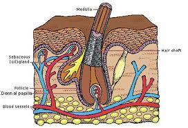 faktor penumbuh rambut