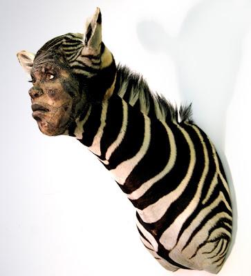 Kate Clark Zebra+kate+clark