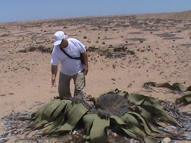 2010 Março - Deserto do Namibe
