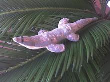La lucertola per Lizard