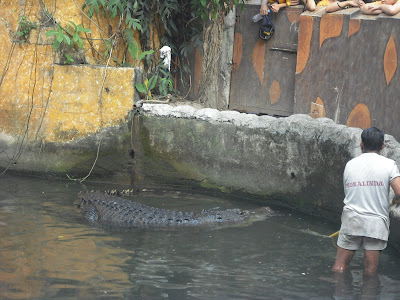 Manila Zoo: crocodile