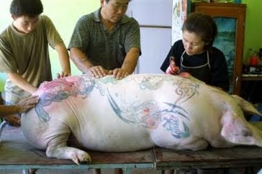Passion Animals Do Not Deserve Animal Owners Tattoo And
