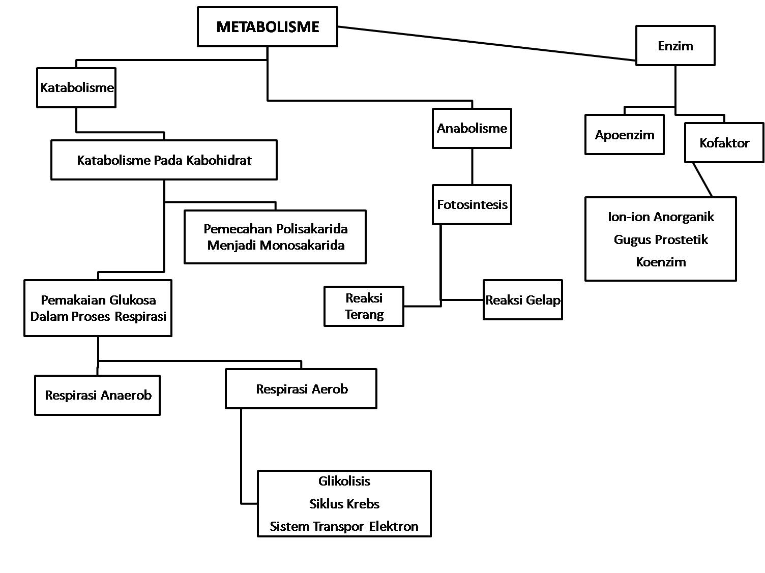 Biokimia Metabolisme Protein Dan Asam Amino